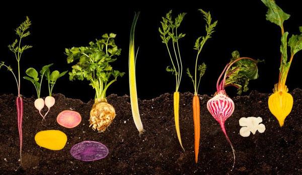 高清图:显微镜下的食物 带来艺术性的冲击感